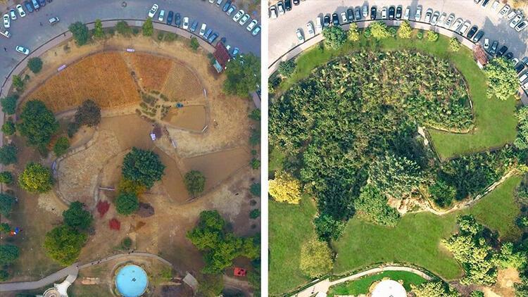 Pakistan'dan 10 kat hızlı ağaç yetiştirme kampanyası