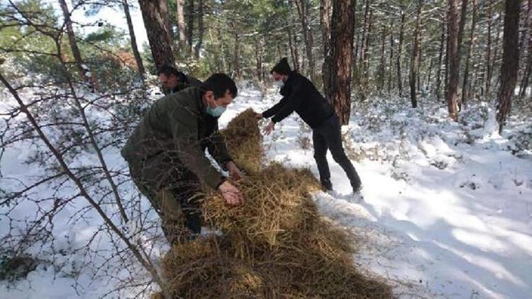 Edirne'de yaban hayvanları için doğaya 1 ton 100 kilo yem bırakıldı
