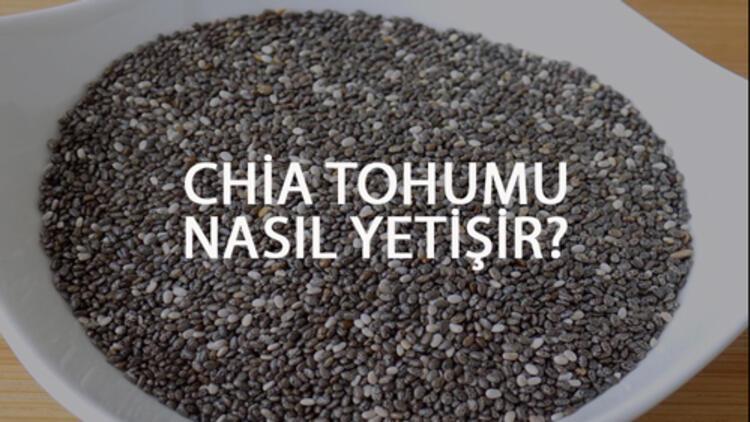 Chia Tohumu Nasıl Yetişir? Chia Tohumu Türkiye'de En Çok Ve En İyi Nerede Yetişir Ve Nasıl Yetiştirilir?