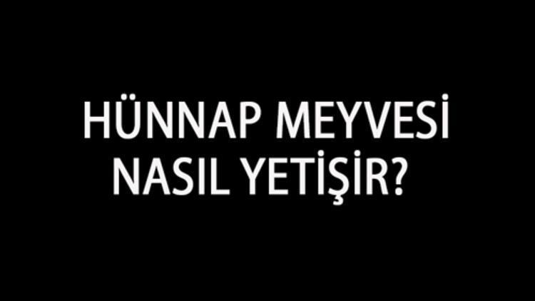 Hünnap Meyvesi Nasıl Yetişir? Hünnap Meyvesi Türkiye'de En Çok Ve En İyi Nerede Yetişir Ve Nasıl Yetiştirilir?