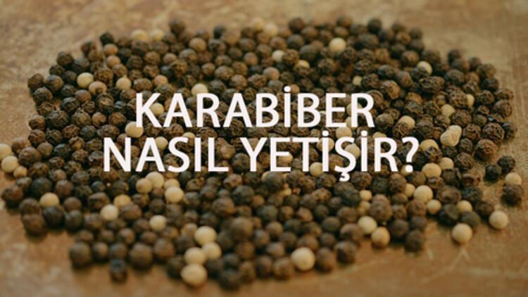 Karabiber Nasıl Yetişir? Karabiber Türkiye'de En Çok Ve En İyi Nerede Yetişir Ve Nasıl Yetiştirilir?