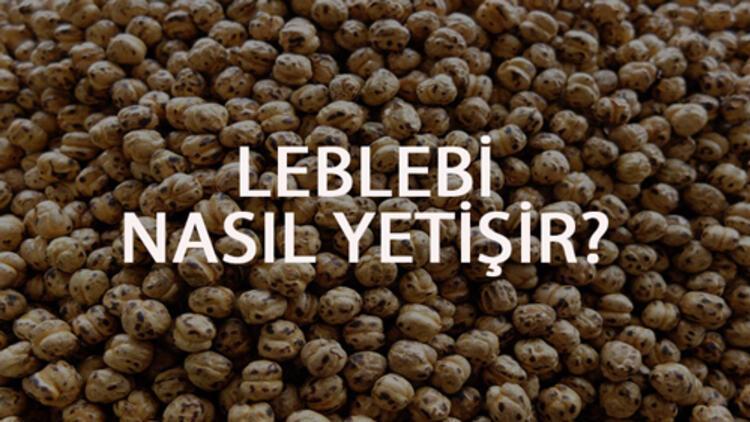 Leblebi Nasıl Yetişir? Leblebi Türkiye'de En Çok Ve En İyi Nerede Yetişir Ve Nasıl Yetiştirilir?