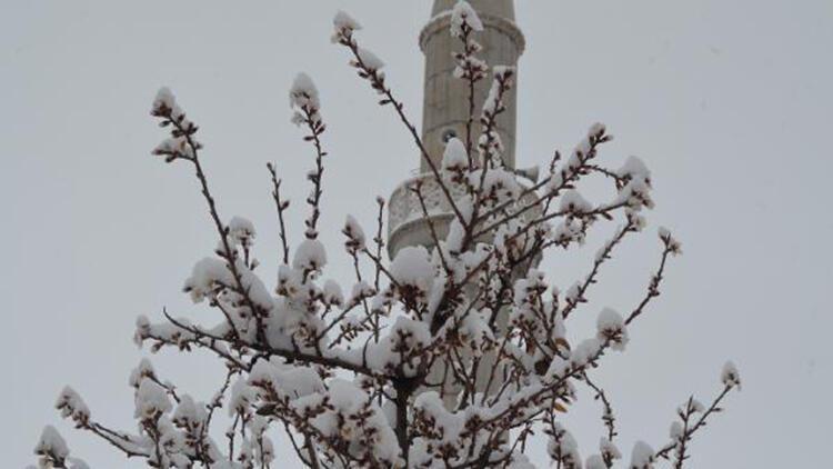 Aksaray'da erken çiçeklenen ağaçlar, karda bembeyaz oldu