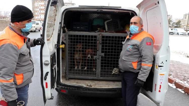 Kayseri'de metruk binada çıkan yangında 2 pitbull kurtarıldı