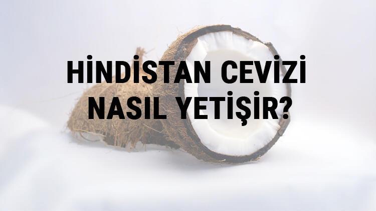 Hindistan Cevizi Nasıl Yetişir? Hindistan Cevizi Türkiye'de En Çok Ve En İyi Nerede Yetişir Ve Nasıl Yetiştirilir?