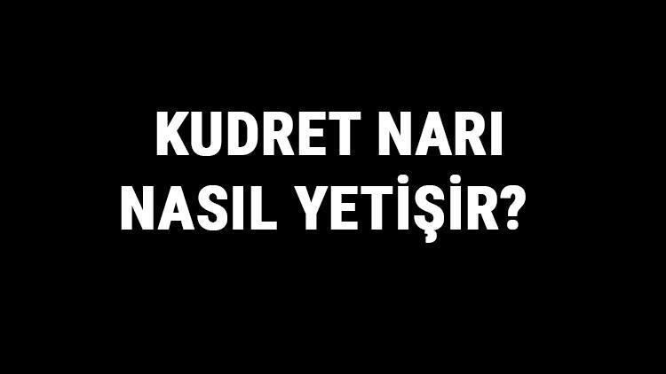 Kudret Narı Nasıl Yetişir? Kudret Narı Türkiye'de En Çok Ve En İyi Nerede Yetişir Ve Nasıl Yetiştirilir?