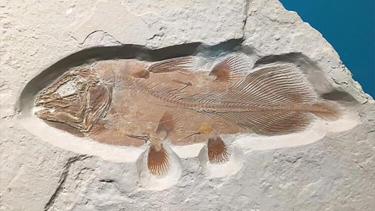 İngiltere'de bulunan 66 milyon yıllık balık fosili heyecan yarattı