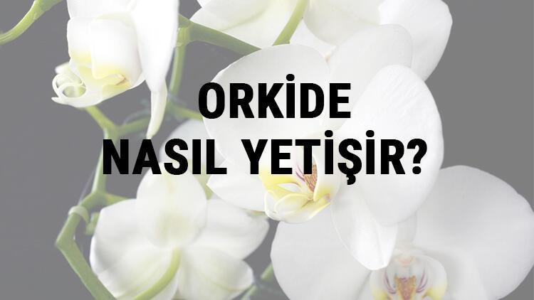 Orkide Nasıl Yetişir? Orkide Türkiye'de En Çok Ve En İyi Nerede Yetişir Ve Nasıl Yetiştirilir?