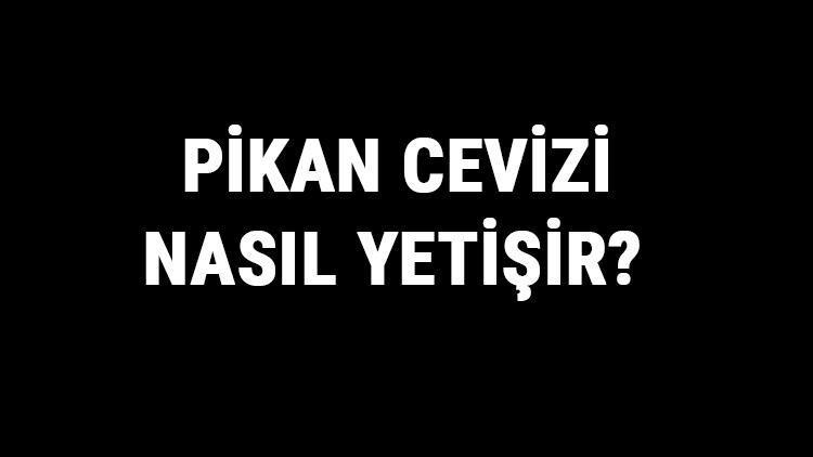 Pikan Cevizi Nasıl Yetişir? Pikan Cevizi Türkiye'de En Çok Ve En İyi Nerede Yetişir Ve Nasıl Yetiştirilir?