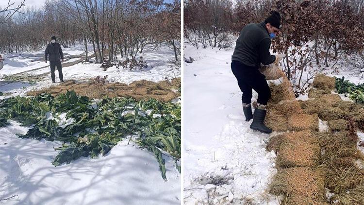 Tekirdağ'da yaban hayvanları için yem bırakıldı