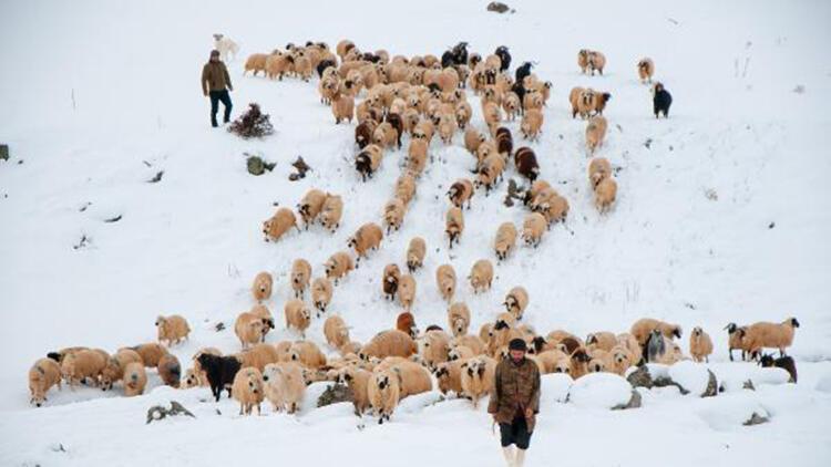 Tunceli'de, çobanların karda zorlu mesaisi