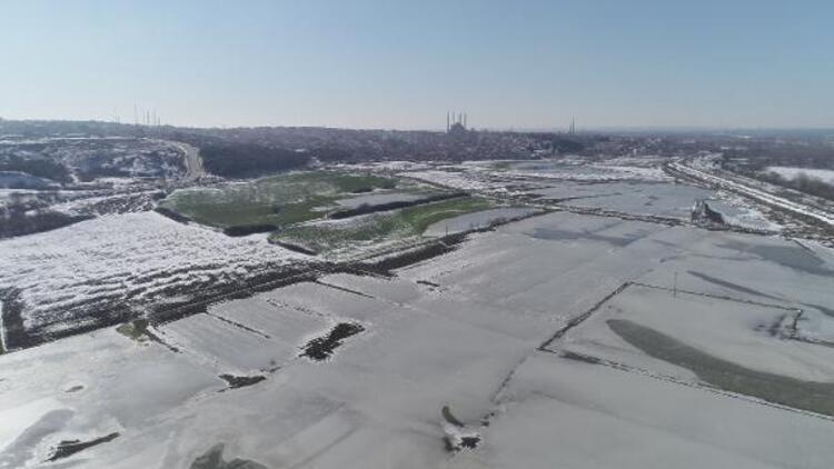 Edirne'de hava sıcaklığı eksi 11 dereceye düşünce tarlalar buz tuttu