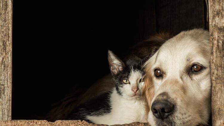 Kedi köpek sahipleri dikkat: Yeni dönem başlıyor