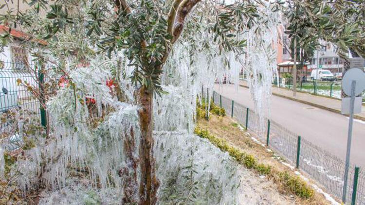 Bahçe hortumundan fışkıran su, ağaçlarda sarkıt oluşturdu