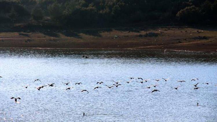Onaç Baraj Göleti'nde kuş türleri artıyor
