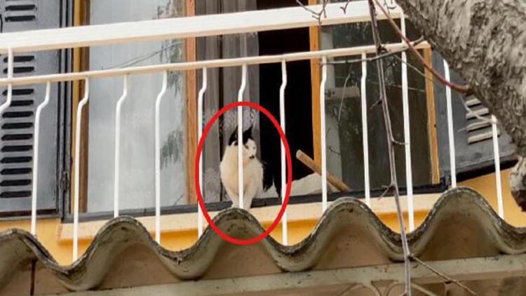 Boş evde mahsur kalan kedi için kurtarma operasyonu