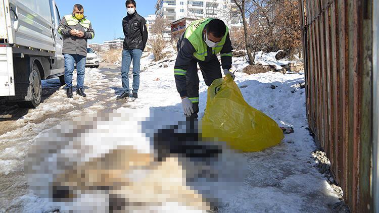 Ankara'da 3 yavru köpek ölü bulundu! Donarak öldüler iddiası...