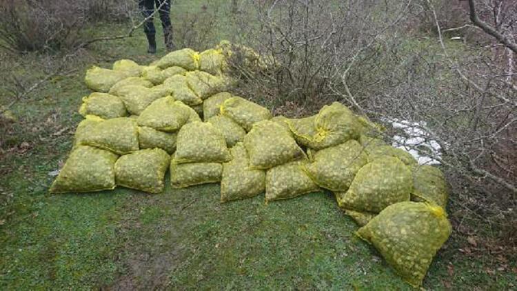 Yunanistan'a kaçırılmak istenilen 750 kilo midye, ormanlık alanda bulundu