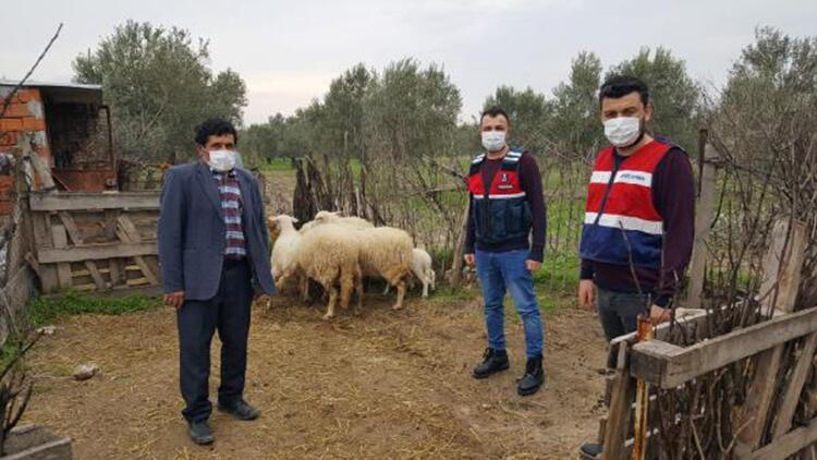 Çanakkale'de çalınan 6 koyun bulunup, sahibine teslim edildi