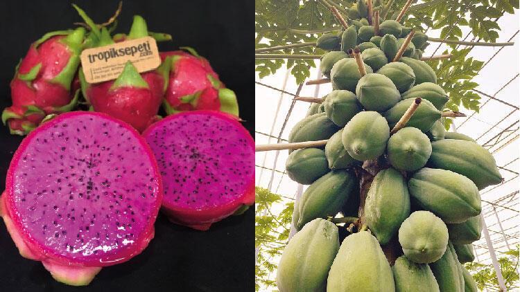 Antalya'nın tropik meyveleri tek sepette
