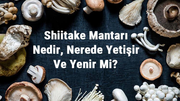 Shiitake Mantarı Nedir, Nerede Yetişir Ve Yenir Mi? Şitaki Mantarı Faydaları, Yetiştiriciliği Ve Özellikleri