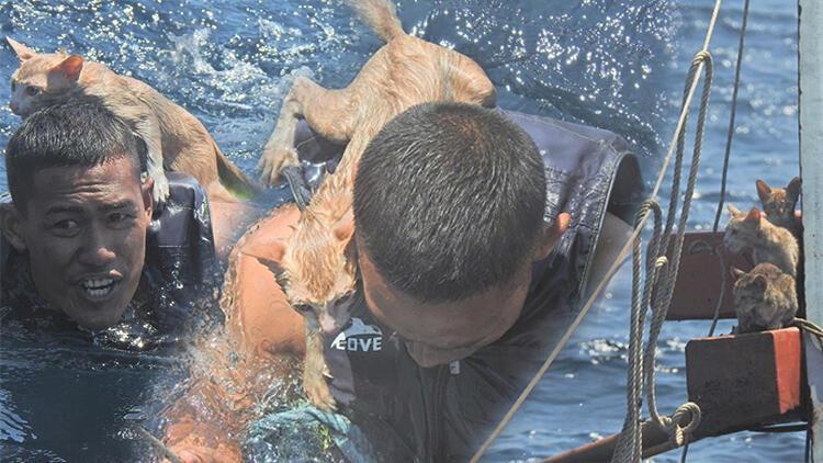 Dünya bunu konuşuyor... Donanmada 'kedi' operasyonu