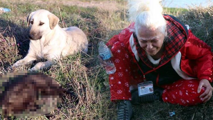 Bunu yapan insan olamaz! Edirne'de vahşet: 8 yavru köpek yakılarak öldürüldü