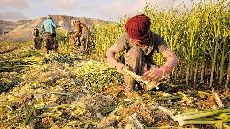 Tarım işçisi çocuklar için eğitim fırsatı