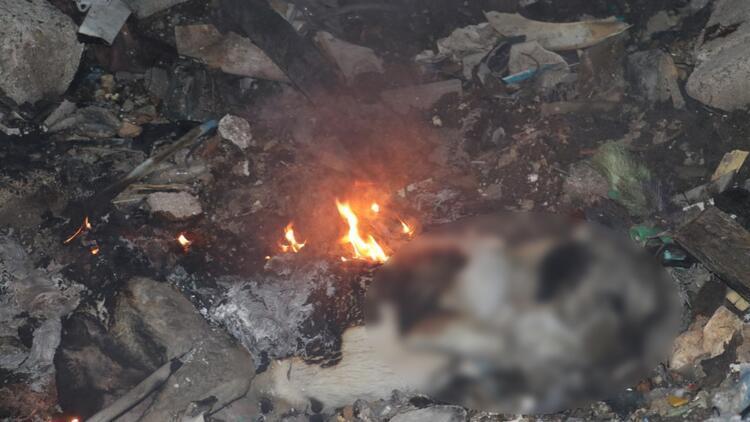 Ankarada, çöplükte yanmış köpek ölüsü bulundu