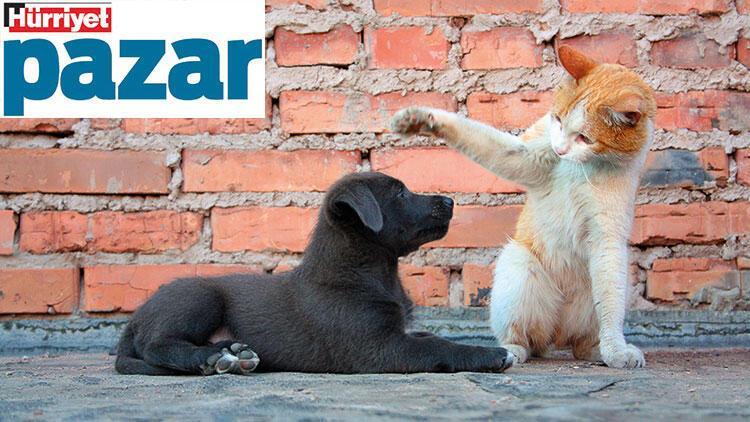 Sokak hayvanları çıkacak yasaya, sıcak bir yuvaya ihtiyaç duyuyor