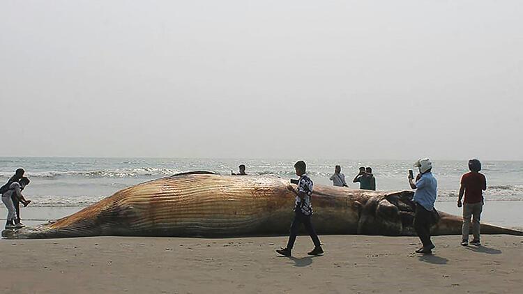13 metrelik ölü balina kıyıya vurdu