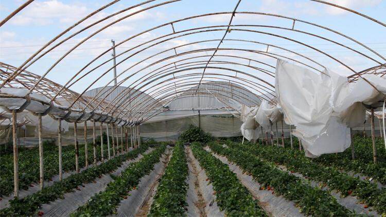 Antalya'da tarım ürünlerini fırtına vurdu!