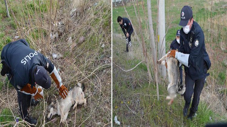 Yaralı köpeği veterinere 'HAYDİ' polisleri yetiştirdi