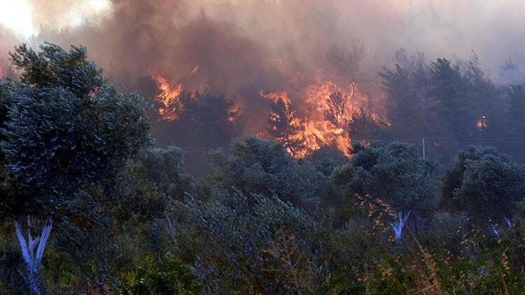 Menderes'teki orman yangını davasında bilirkişi raporu istendi