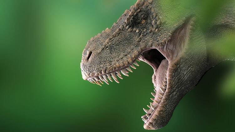 Bilimsel araştırma: Dünyada 2,5 milyar T-rex dinozor türü yaşadı