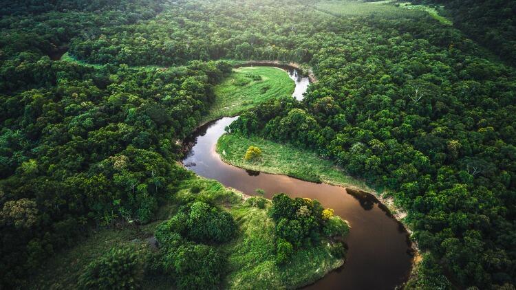 Et, çikolata, kahve... Her yıl kişi başı 4 ağaç bu yiyeceklere kurban gidiyor