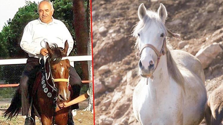 Kayıp atlar bu çiftlikte iddiası