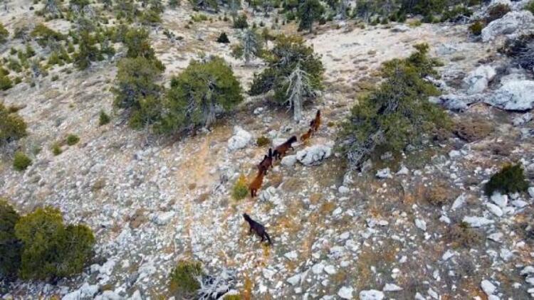 Burdur'da yılkı atları, dronla görüntülendi