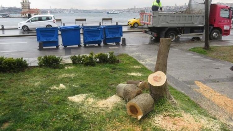Üsküdar'da ağaç kesmişlerdi! 2 şüpheli, 200 ağaç dikecek