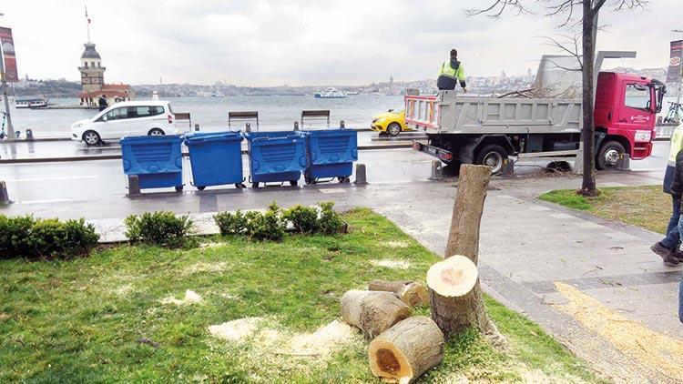 100'er ağaç cezası