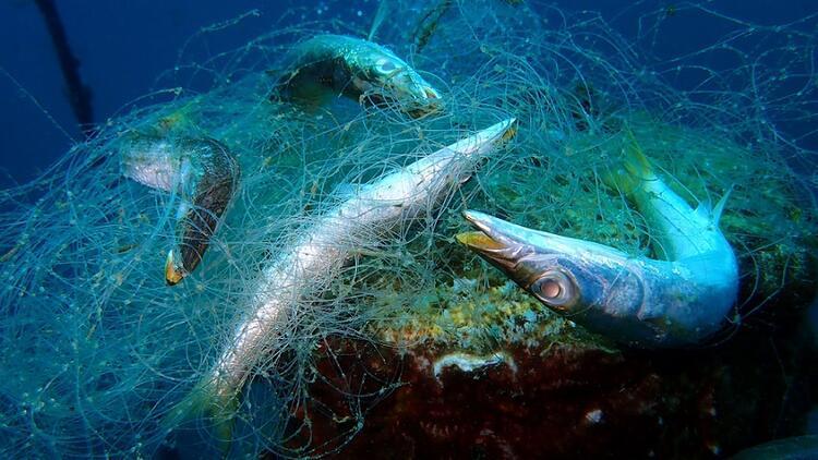Balık diye plastik mi yiyoruz? Marmara ve Karadeniz'deki balık türlerindeki sonuçlar şaşırttı