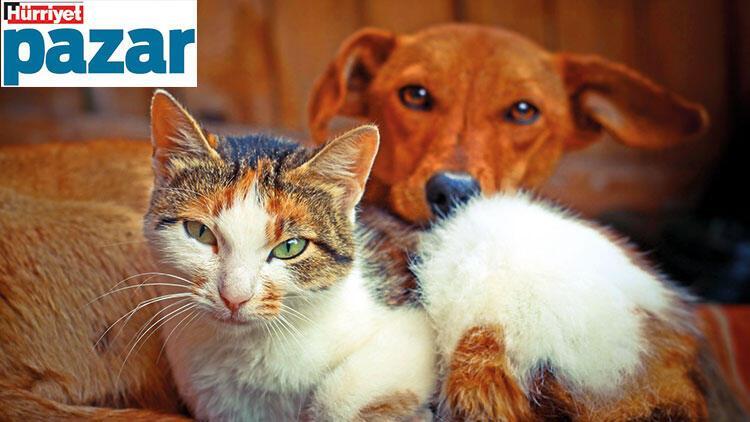 Biz 'evde kal'ırken evcil hayvanlarımız huzurlu mu?