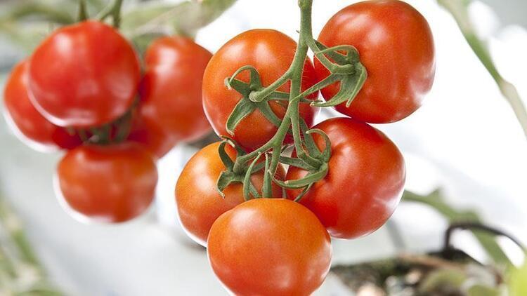 Antalya halleri nisan ayı domates, sebze ve meyve endeksi açıklandı