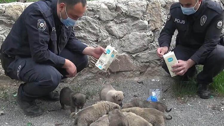 Tam kapanmada sokak hayvanlarının yardımına koştular