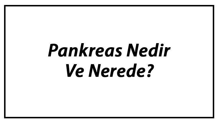 Pankreas Nedir Ve Nerede? Pankreas Ne İşe Yarar Ve Görevleri Hakkında Bilgi