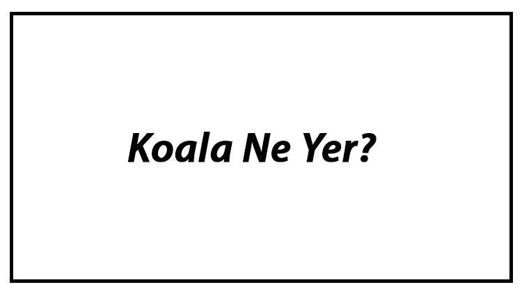 Koala Ne Yer? Koalalar Nasıl Beslenir Ve En Çok Sevdiği Besinler Neler