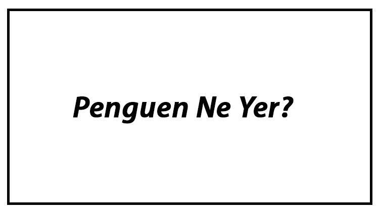 Penguen Ne Yer? Penguenler Nasıl Beslenir Ve En Çok Sevdiği Besinler Neler