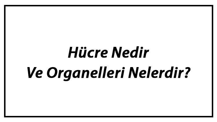 Hücre Nedir Ve Organelleri Nelerdir? Hücre Organellerinin Görevleri Hakkında Bilgi