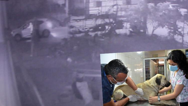 Antalya'da evin önünde bağlı köpeği silahla yaralayan 2 şüpheli serbest