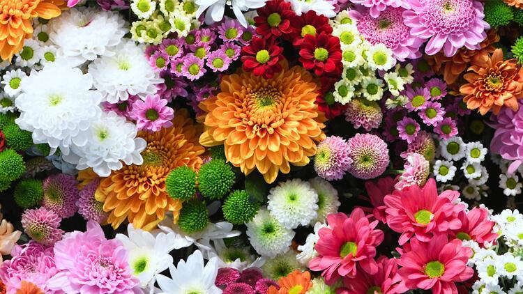 Çiçekçiler servet kazanıyor! İhracatları yüzde 100 arttı